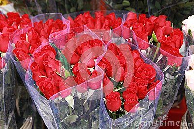 Colorful roses background. Beautiful, high quality, good for holidays, valentine…