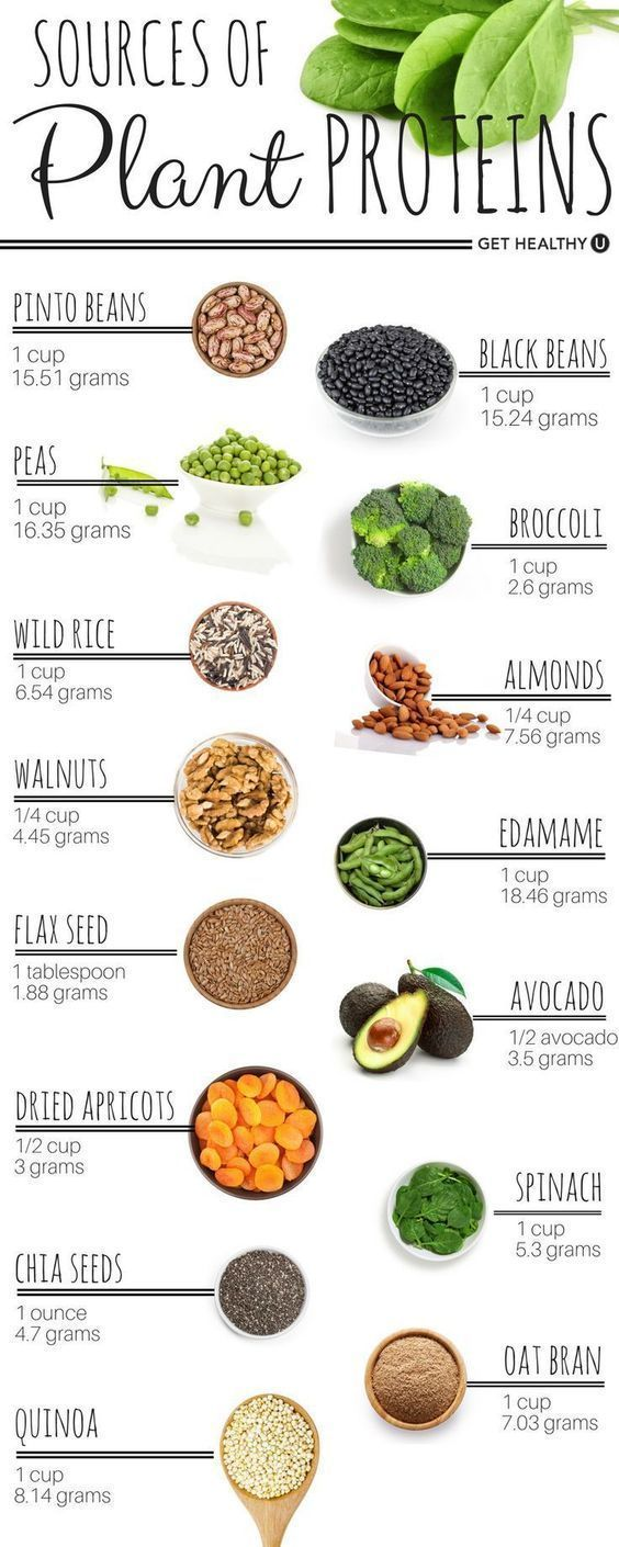 Protein can be found in both animal and plant-based sources! Check out the best …